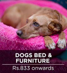 pepperfry dogs beds and furnitures
